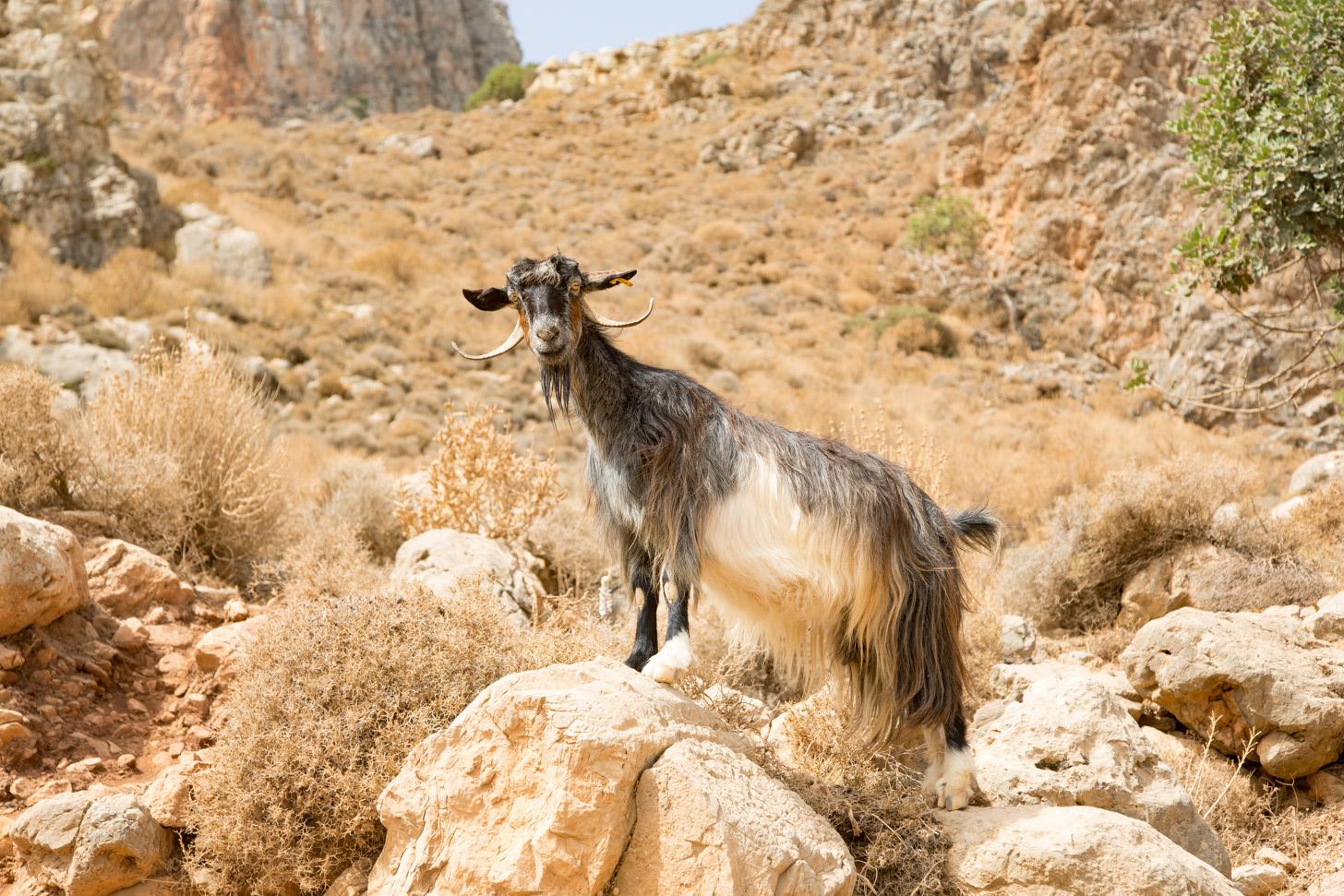 Een vriendelijke inwoner van Kreta